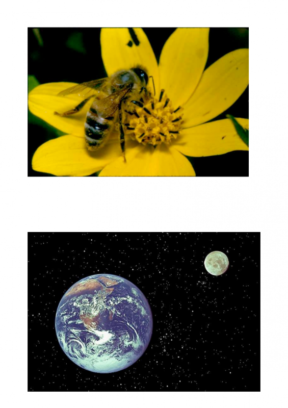 5.-Subject-Object-Pairs-lessonEng_011-565x800.png