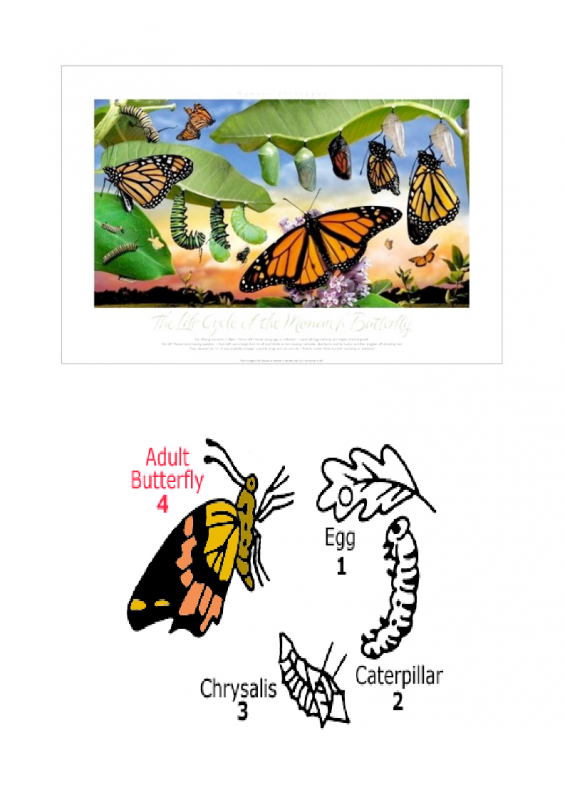 11.-Growing-period-lessonEng_014-565x800.png
