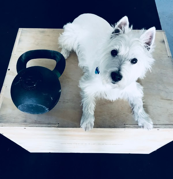 Even our doggy Scottie likes to WOD!