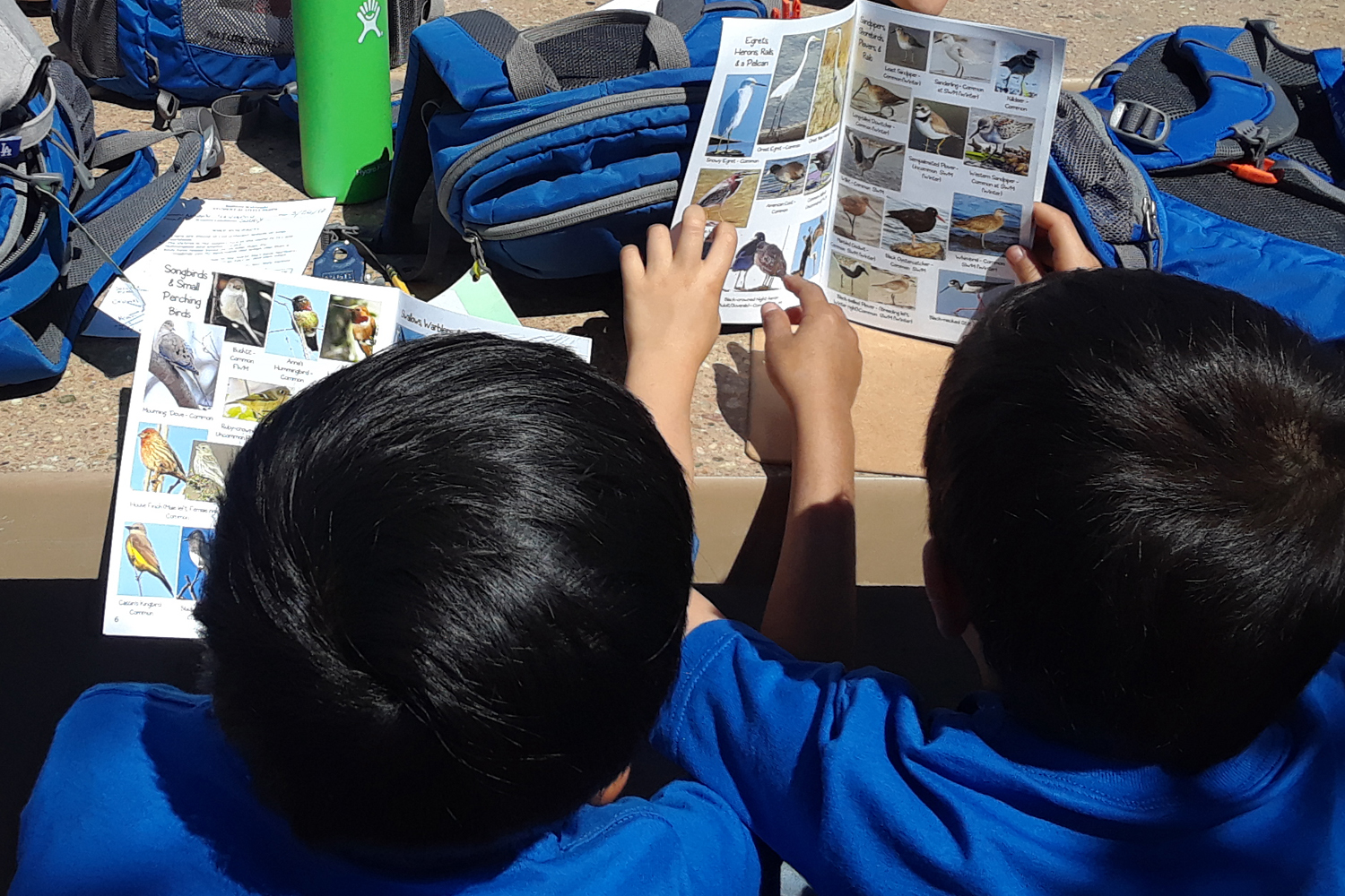 Close-up of two boys reading field guide