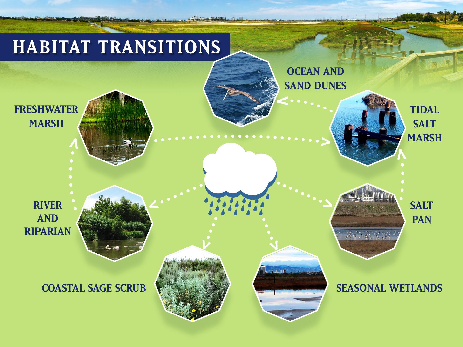 Habitat Transitions Diagram