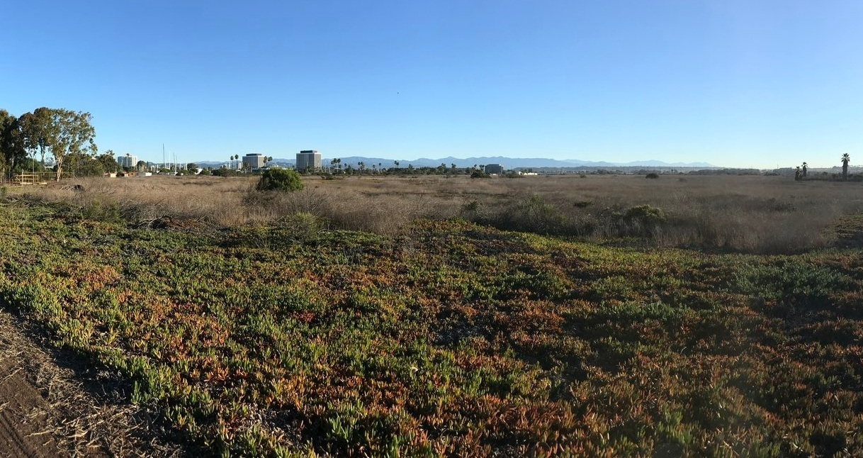 Much of Ballona is covered in invasive plants, like iceplant, castor bean, and mustard.