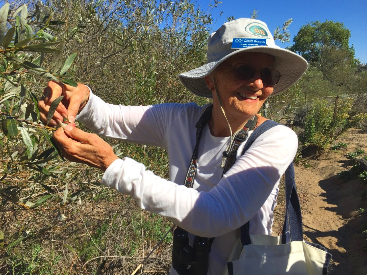 June, a Friends of Ballona Wetlands Docent