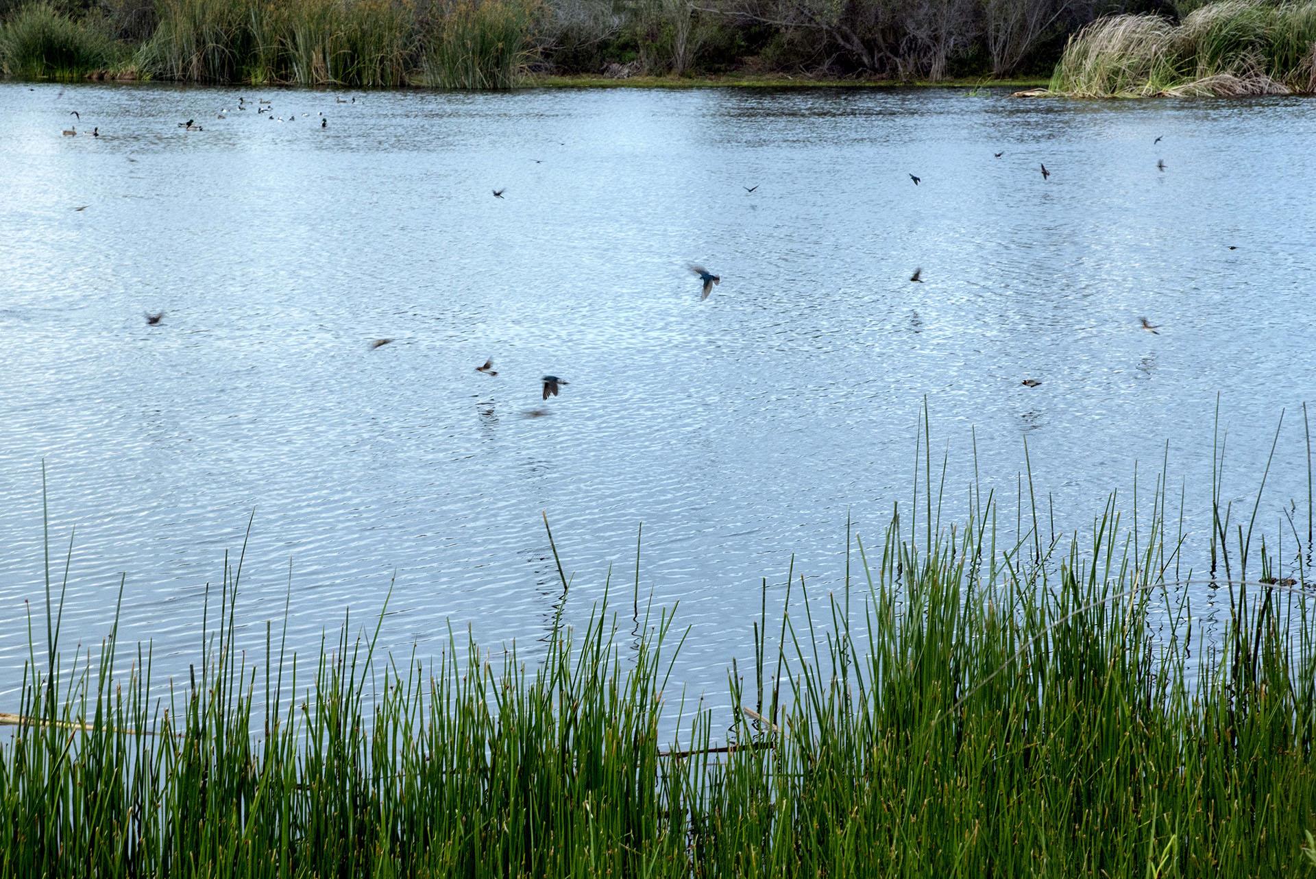 Ballona Freshwater Marsh full of Wildlife