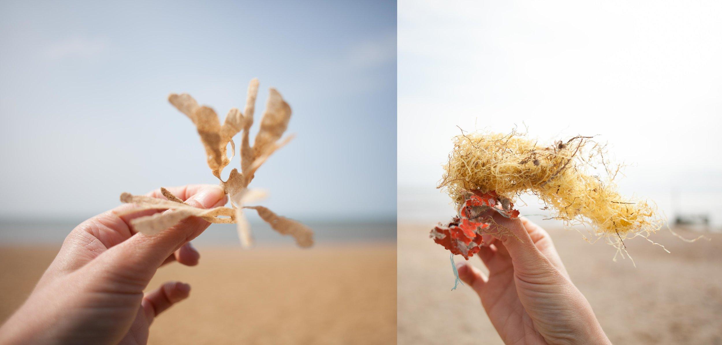 seaweedorplastic.jpg