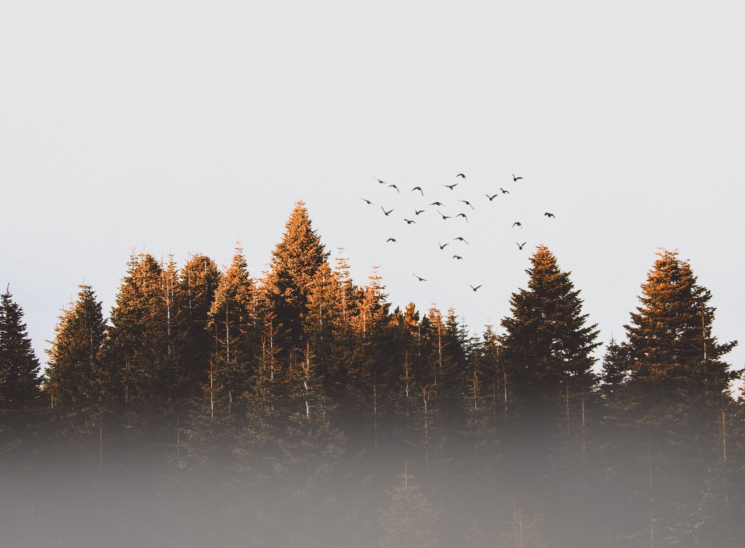 cold-conifer-dawn-917494.jpg