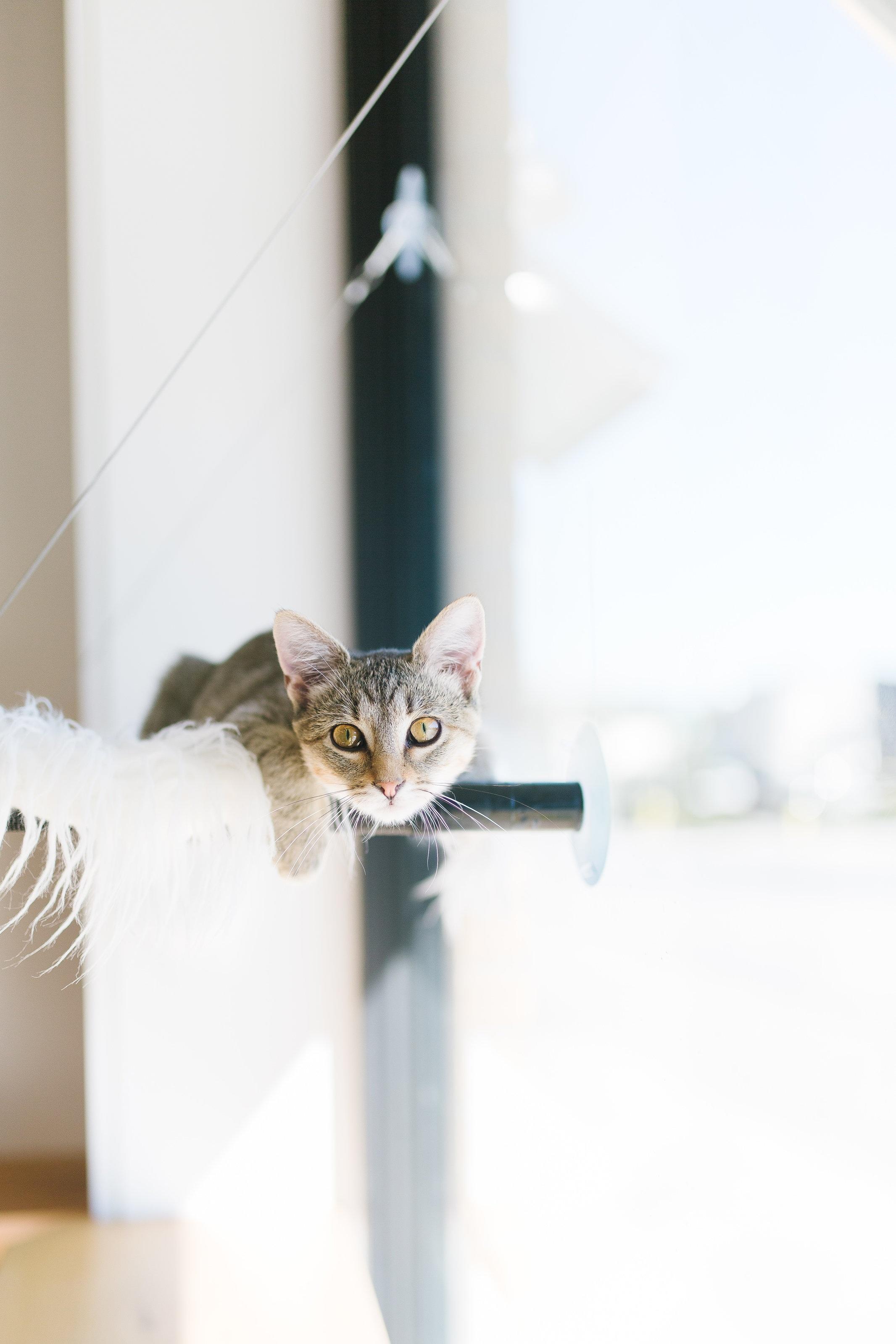 Felius Cat Cafe -