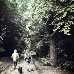 Forest Walk 2017