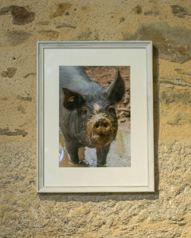 EXPOSITION DE PHOTOS!! Venez me rencontrer Samedi 2 mars au bar/resto Le Sax'o a Chalus ou j'expose une collection de mes clichés du Limousin (oui; il y aura des vaches!!) L'expo sera en place jusqu'au 23 mars :)10 Place de la Fontaine, 87230 Chalus  #tourolim #igerslimousin #igerslimoges #igershautevienne #igersaquitaine #igersaquitainelimousinpoitoucharentes #parcnaturelregionalperigordlimousin #limousin #hautevienne_dep #hautevienneinattendue #hautevienne87 #hauteviennetourisme #hautevienne #photoexpo #photoexhibition
