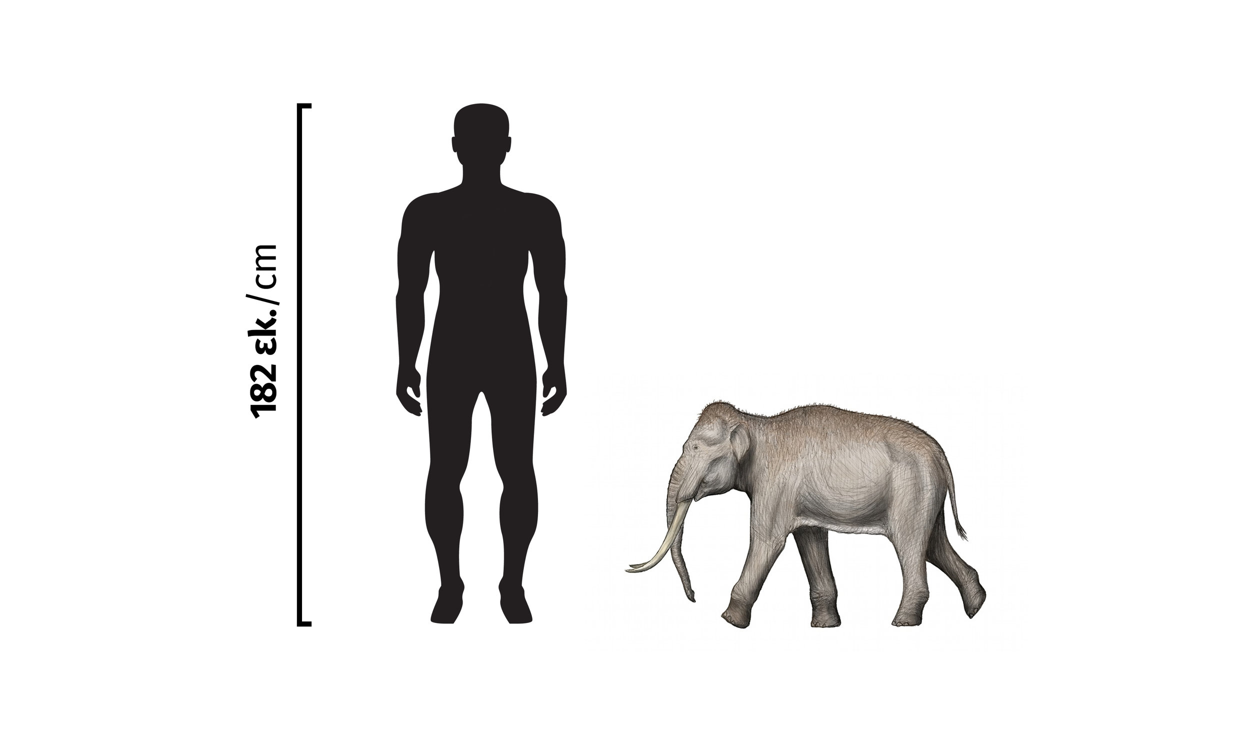 Elephant and Person.jpg
