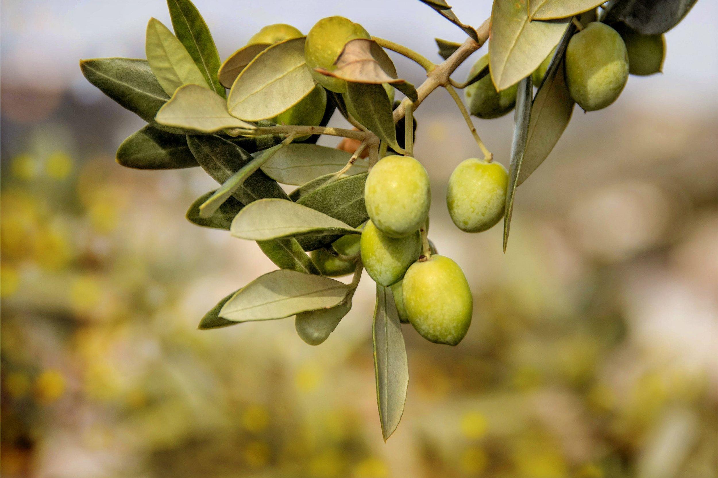 olives-3011343.jpg