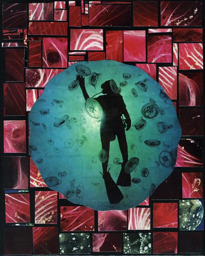 Jellyfish Everwhere!