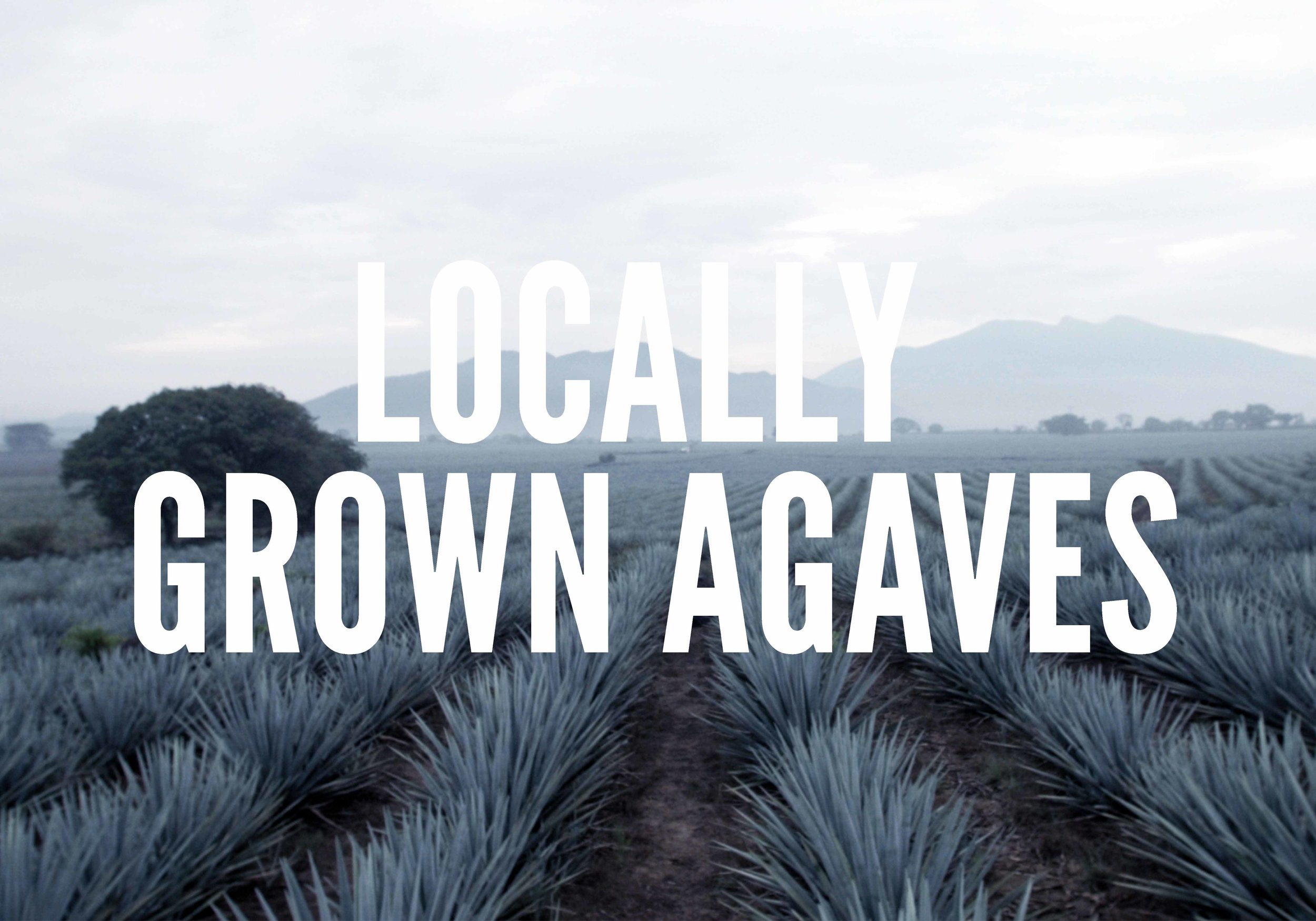COVER-LOCALLY-GROWN.jpg