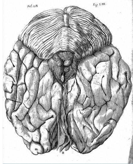 Descartes brain drawing 1662 / Wellcome Images