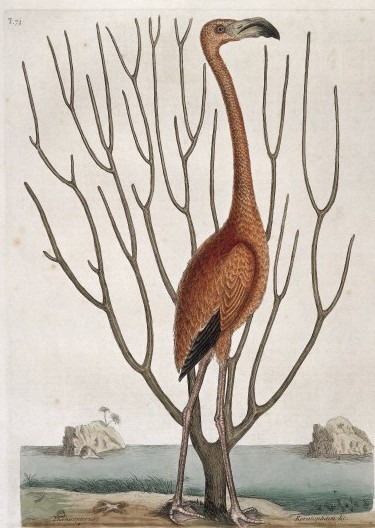 Bird 1731 / Wellcome Images