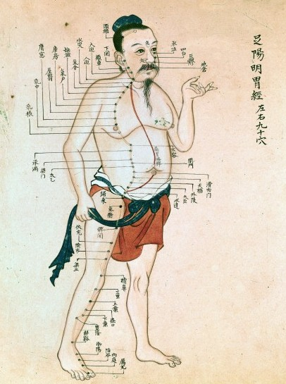 Acupuncture Chart / Wellcome Images