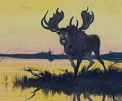 Moose / Library of Congress