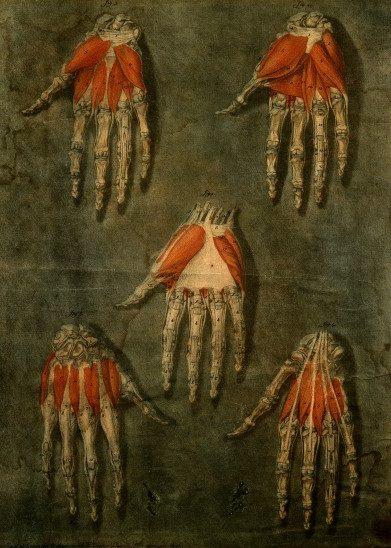 Hand / Wellcome Image