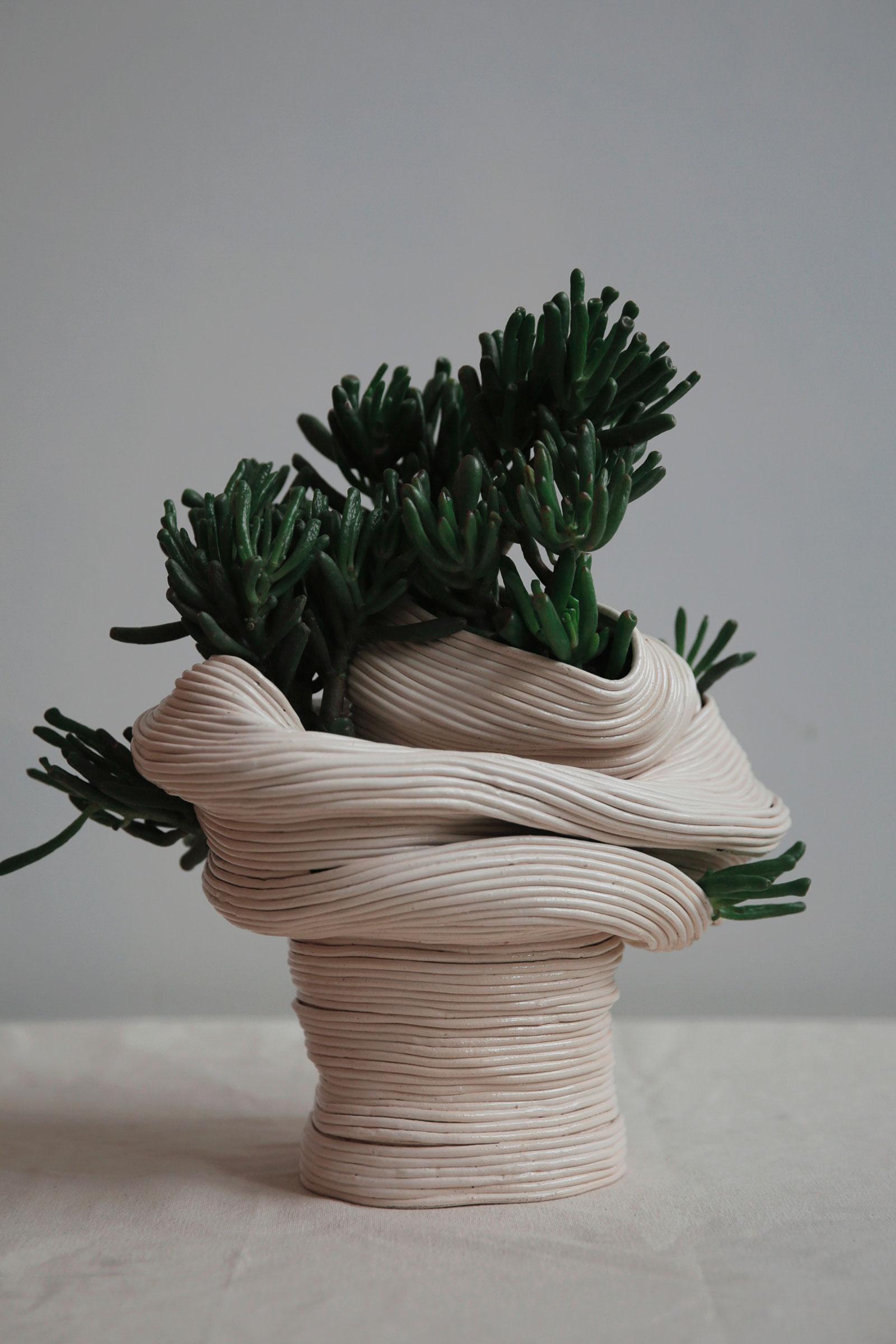 zhu-ohmu-jade-plant3.jpg