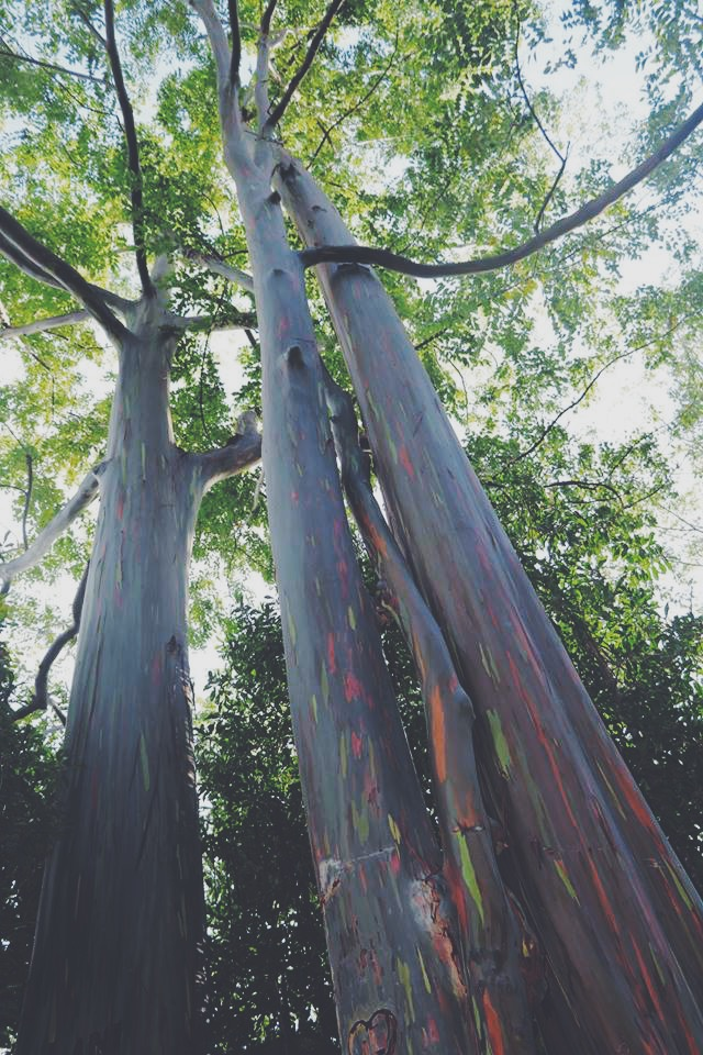 painted trees real hawaii road to hana maui tour travel blogger travel vlogger travel influencer carla maria bruno.JPG