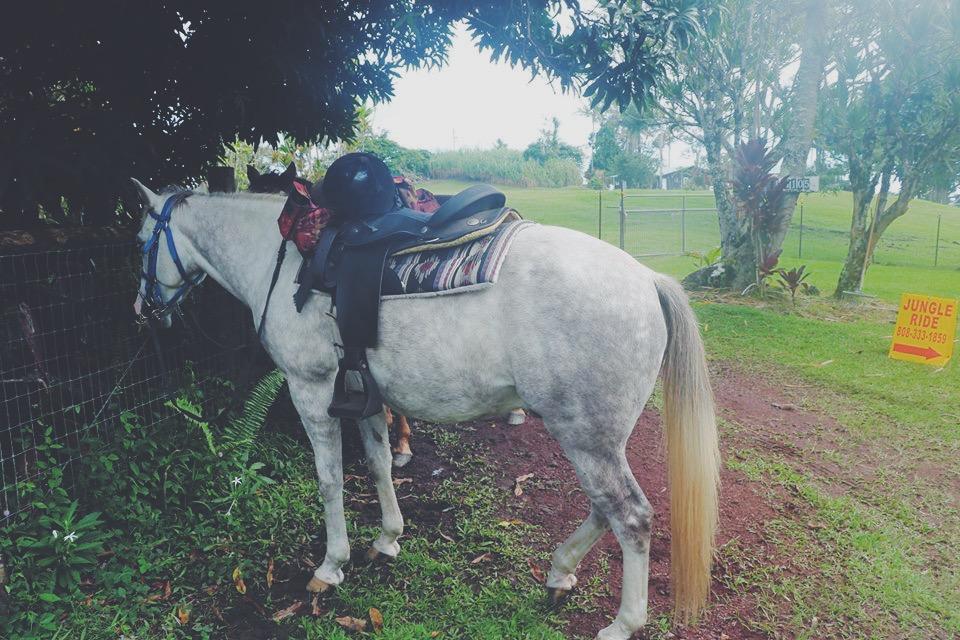 horse white horseback riding in the jungle hawaii big island hilo travel tourism blogger vlogger influencer carla maria bruno blog lifestyle adventure.JPG
