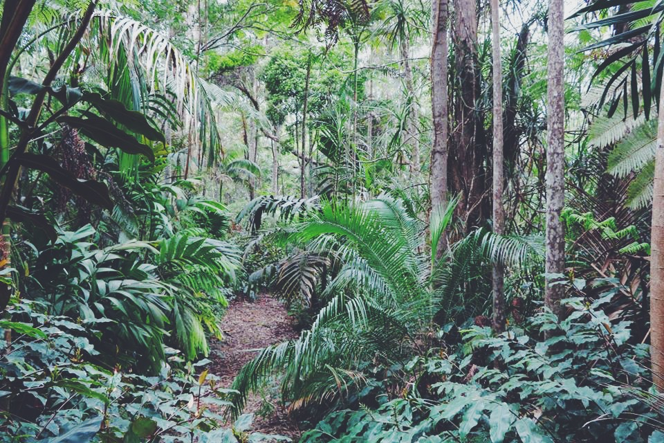 in the forest the gold coast travel tourism blogger vlogger influencer collaboration carla maria bruno travel with me tv blog youtube hawaii tips kona norwegian cruise line.JPG
