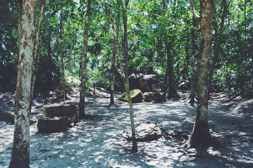 trees tikal flores guatemala mayan tours mayan ruins backpacking carla maria bruno travel blogger vlogger influencer.jpg