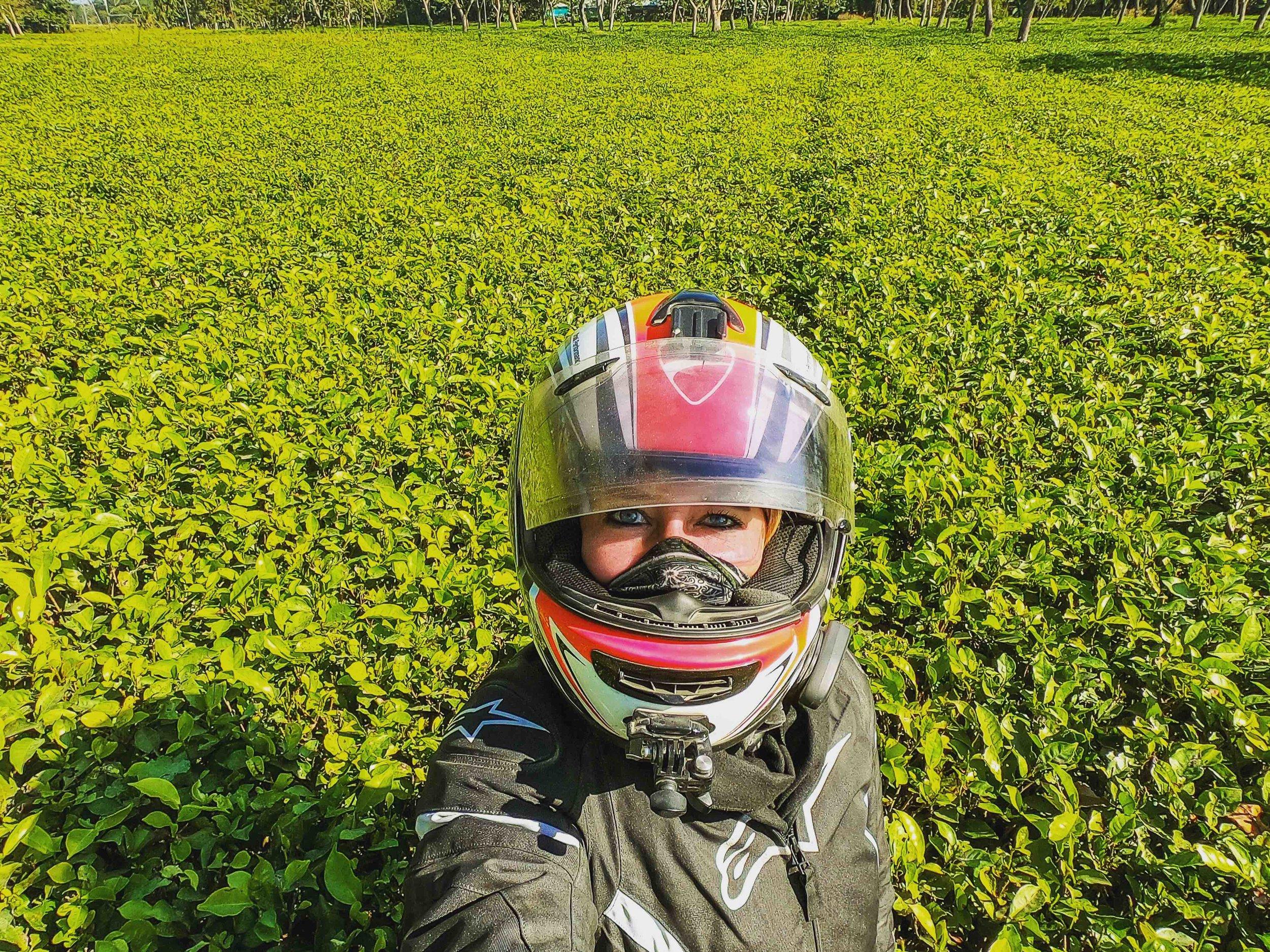 Tea+Estates+between+Darjeeling+and+Cooch+Bihar.jpeg