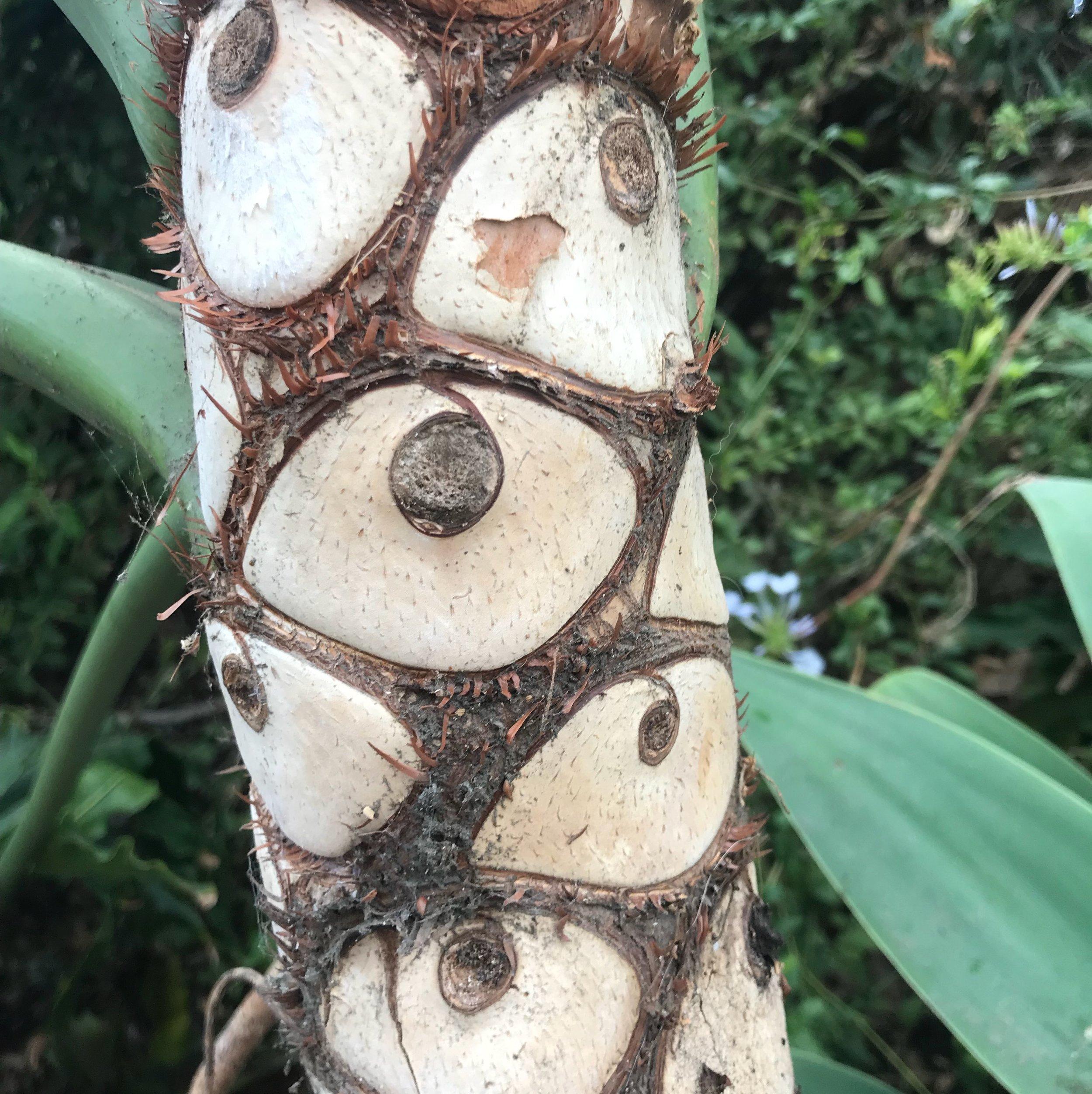 palmtreeeyes.JPG