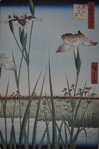 Irises bloom - 菖蒲華 あやめはなさく27 June - 1 July / #29 of 72 SeasonsHorikiri, Tokyo, JAPANCLICK HERE to the original blog post24 SeasonsThe 2 nd pentad of Summer Solstice二四節気 夏至 次候