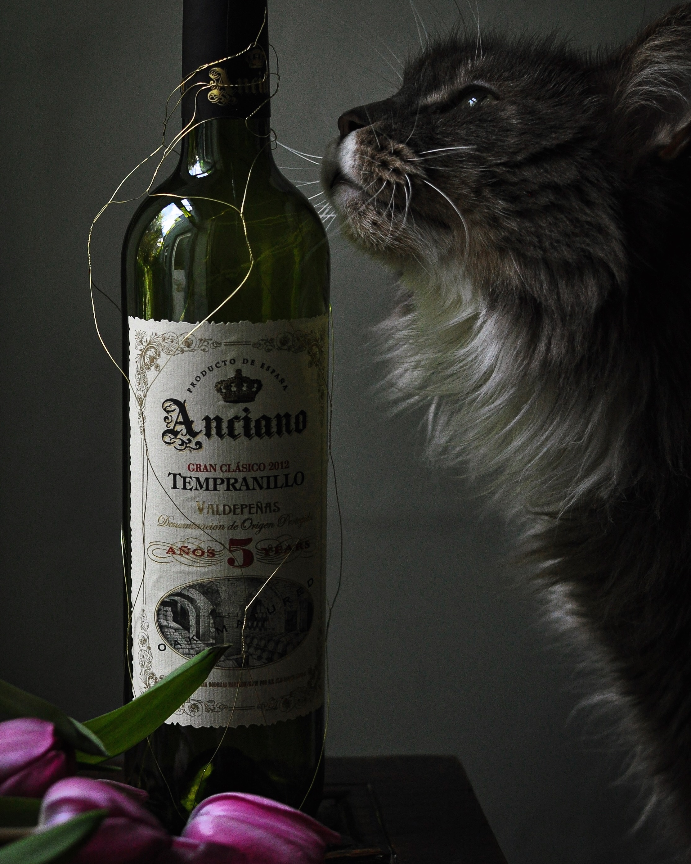 Maine Coon Cat Ghost & wine.JPG
