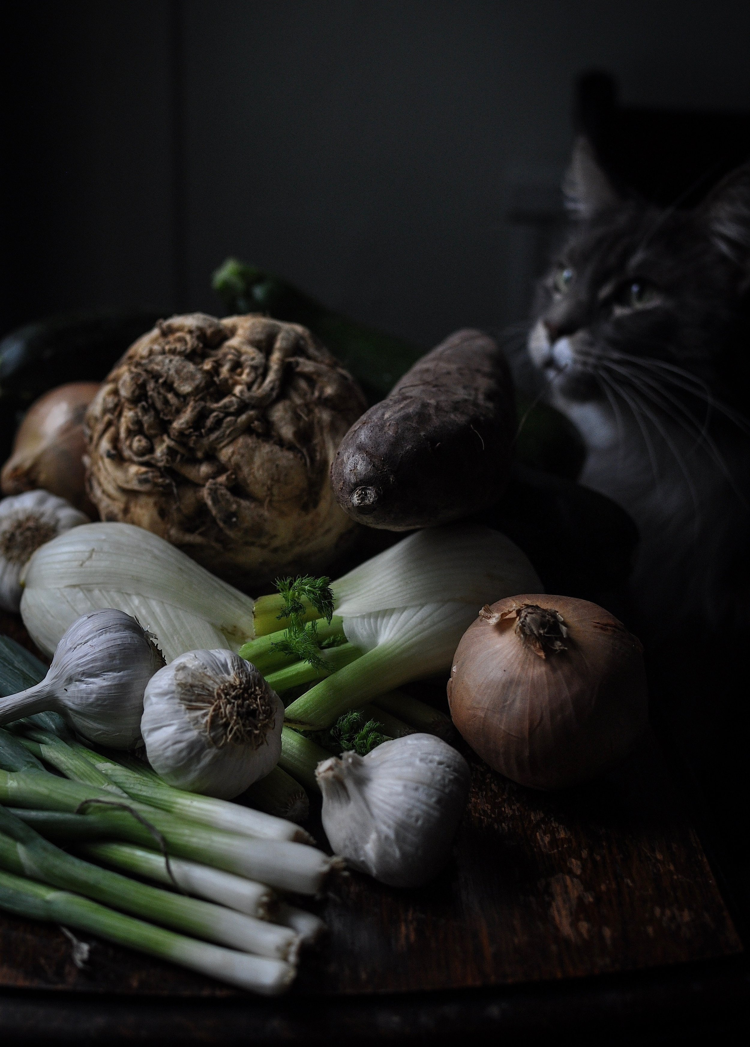 Maine Conn cat Ghost & vegetables.jpeg