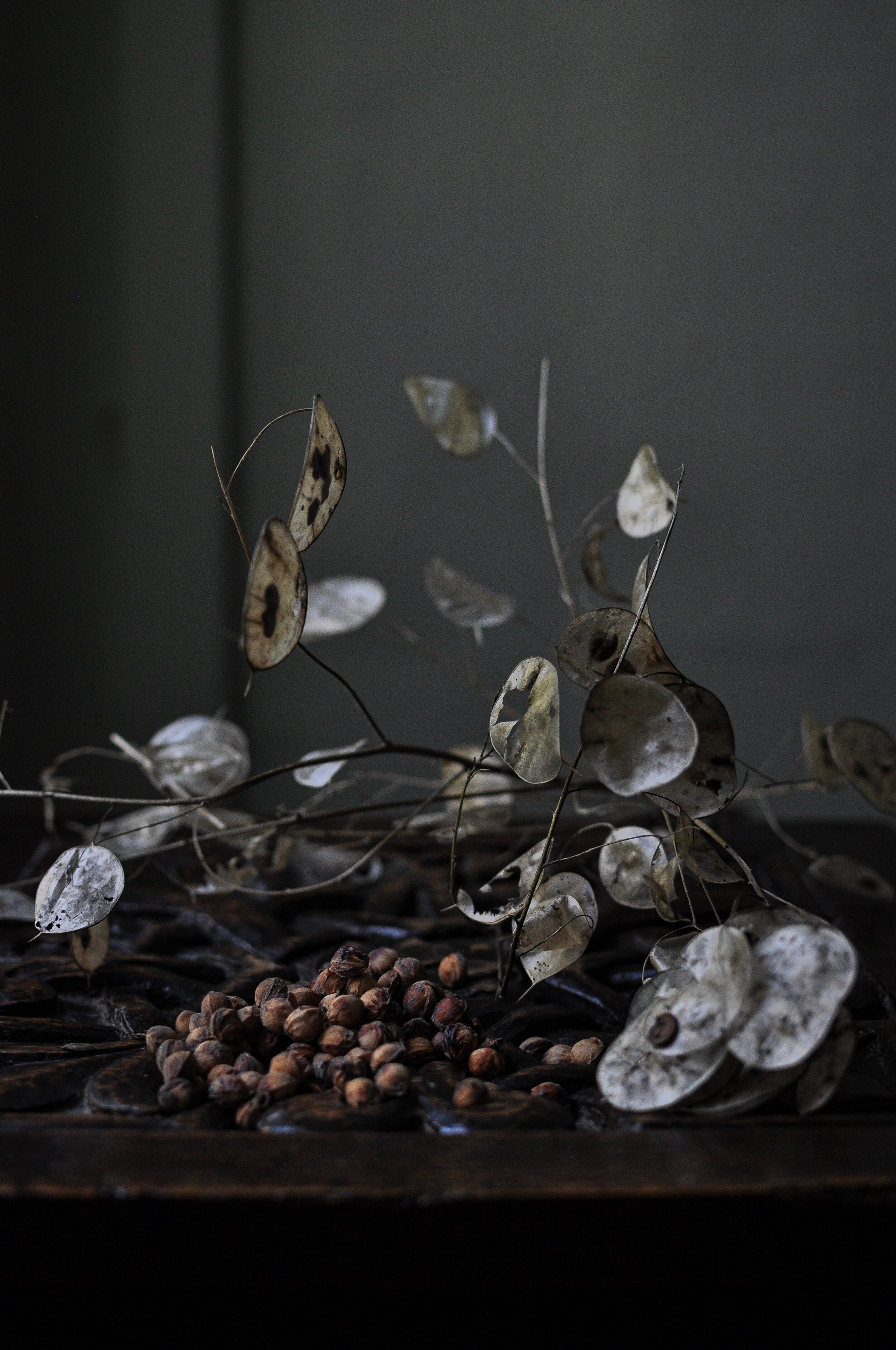 Lunaria / Honesty seed pods