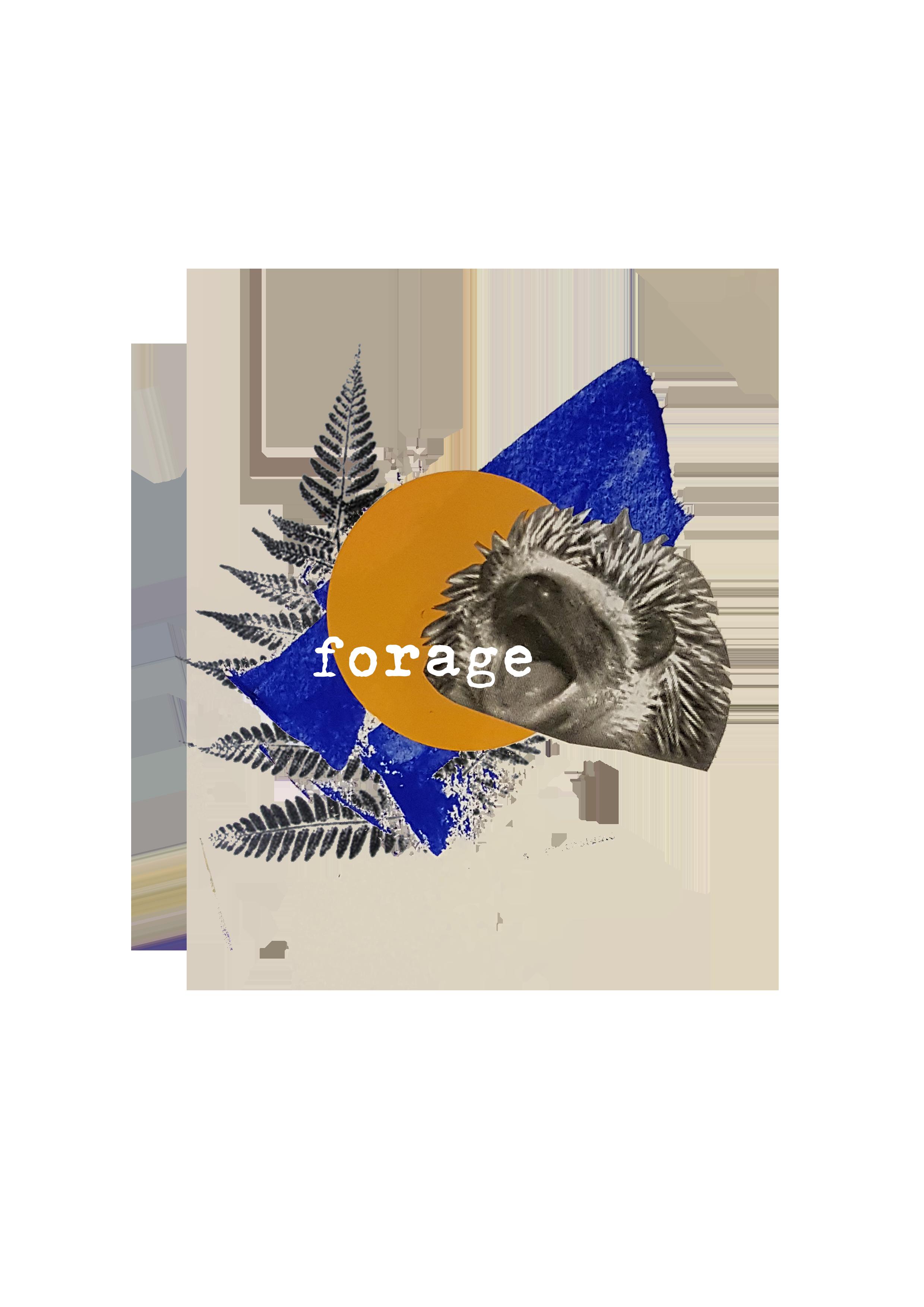 hedgehogcollage.png