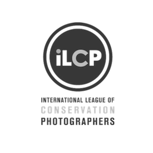 ILCP+3.0.png