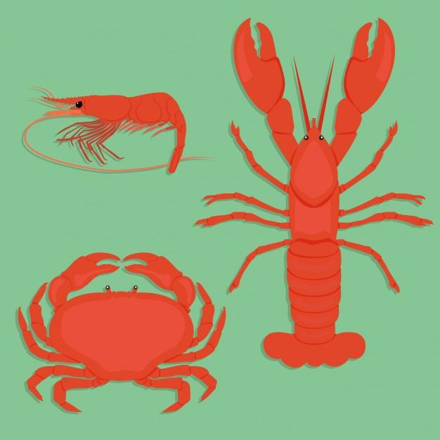 shellfish designs collection 1212 544