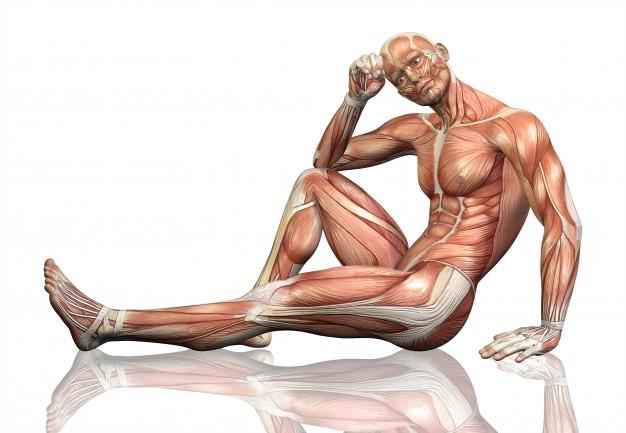 muscle?format=original