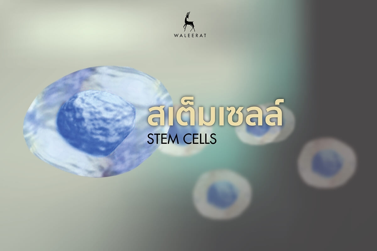Cell Therapy คืออะไร