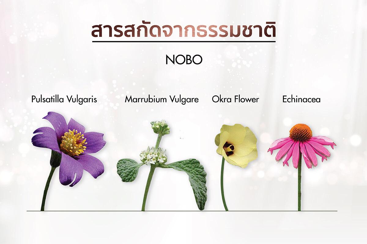ส่วนประกอบสำคัญของ NOBO
