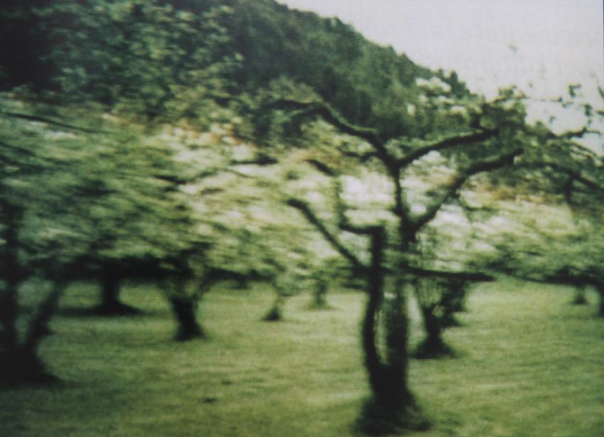 ptrees.jpg