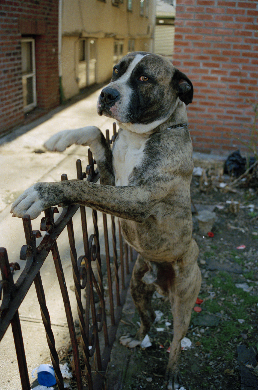 dog_looking_at_me.jpg
