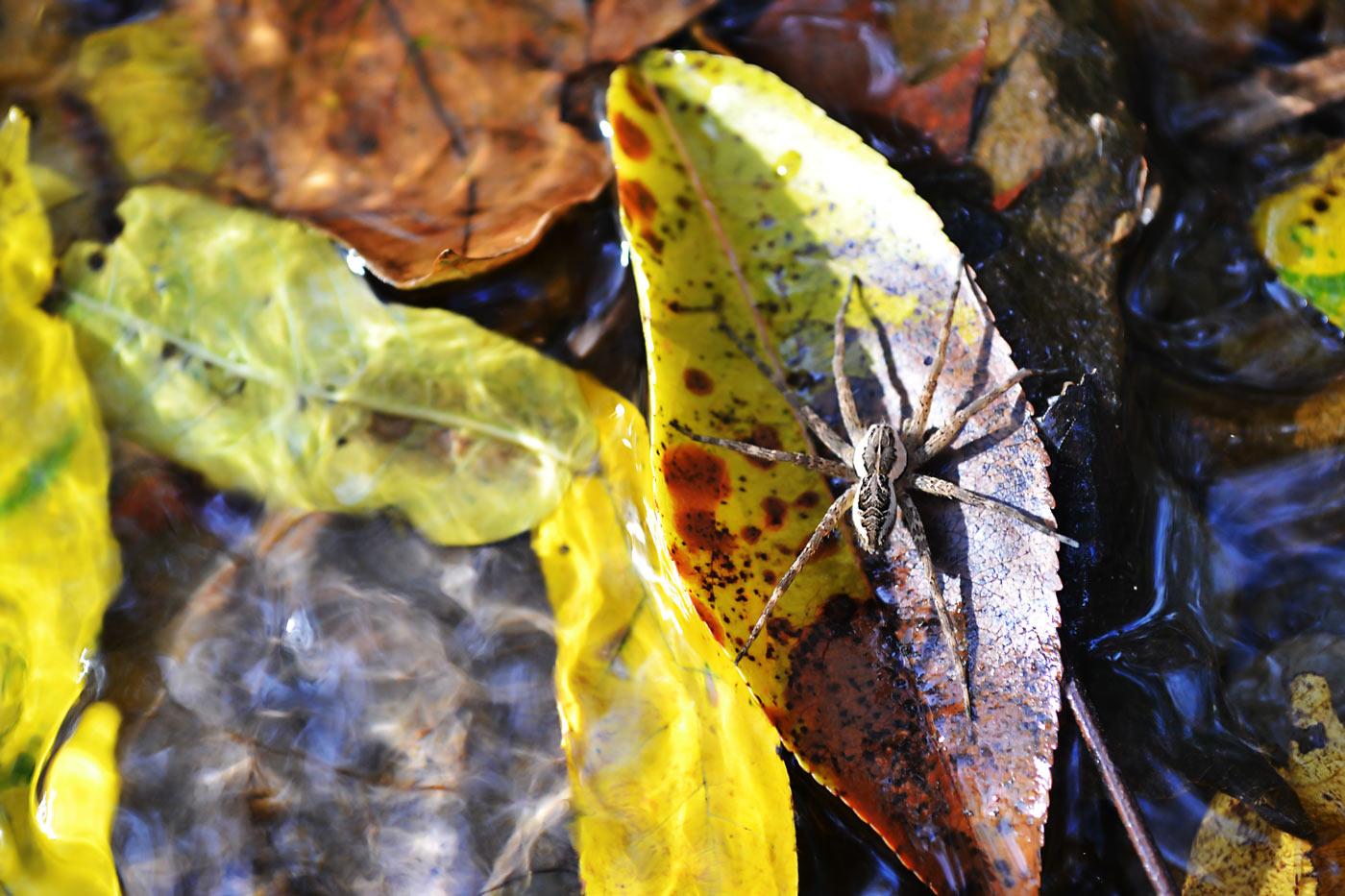 moist_spider.jpg