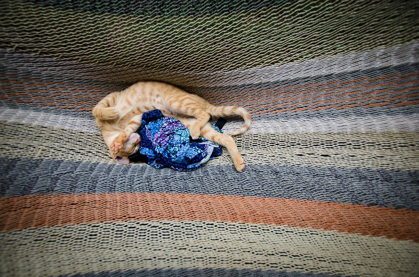 nica_kitty.jpg