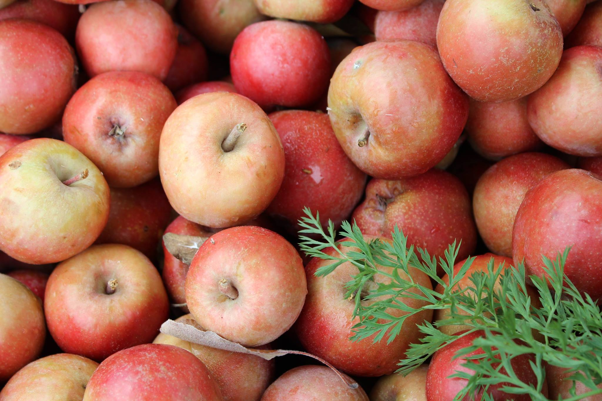 Morren Orchard - Henry Morren and his family produce dozens of varieties of heritage apples, showcasing all of the many things an apple can be.