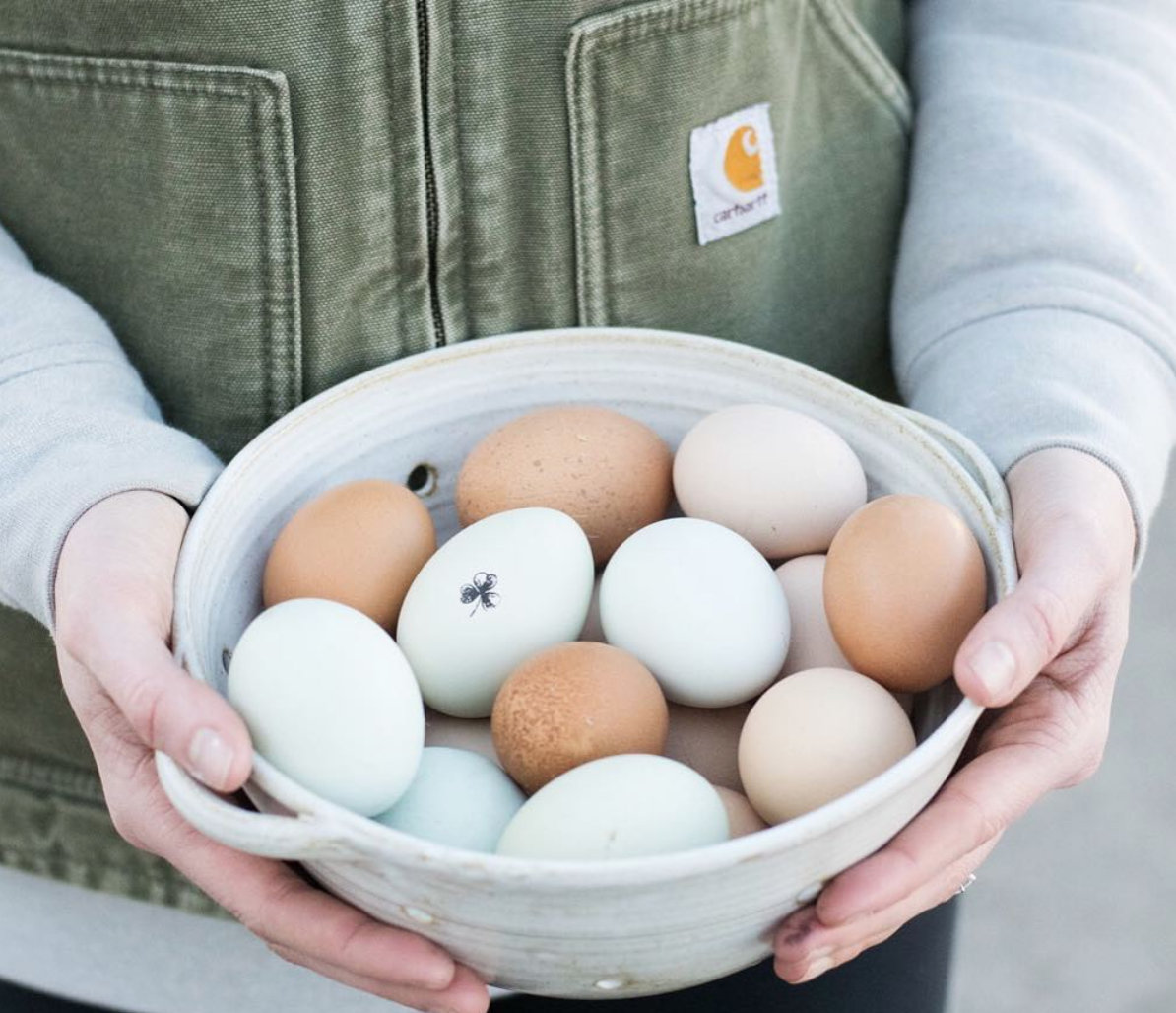 gavin-farms-hand-gathered-eggs