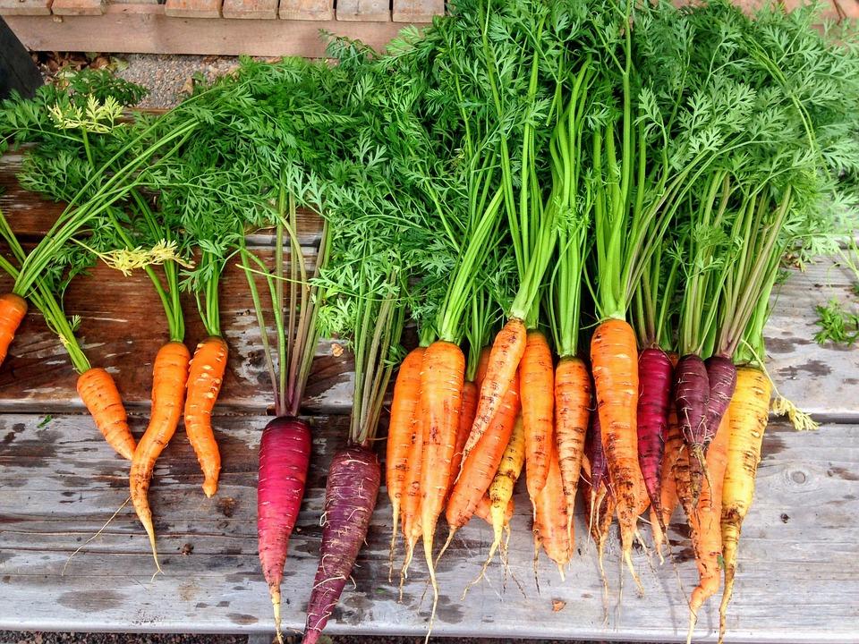 carrot-2743498_960_720.jpg