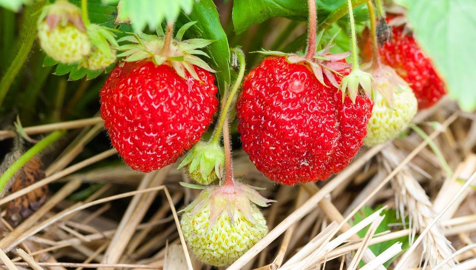 fruit-3269791_960_720.jpg