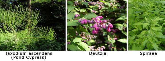 plant-samples.jpg