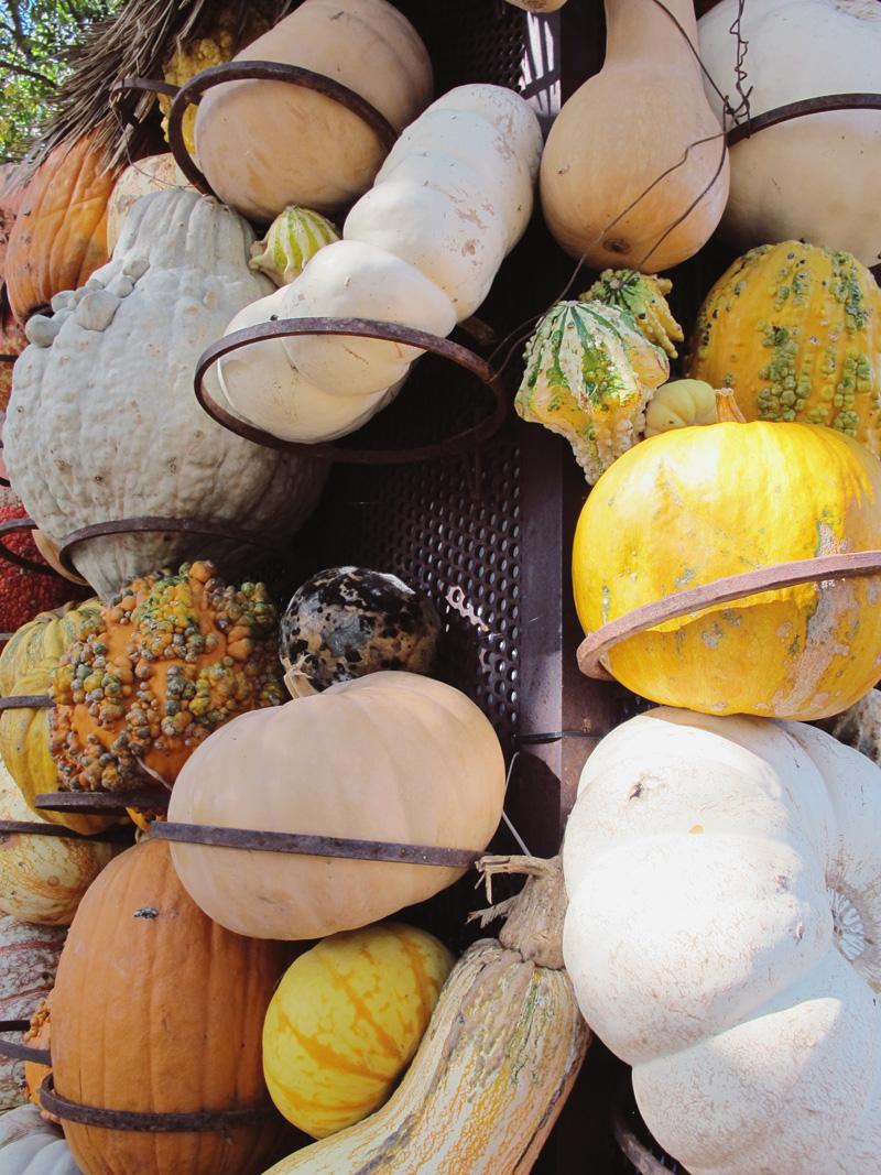 pumpkin-attachments.jpg