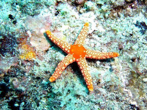 starfish regenerative medicine regeneration.jpg